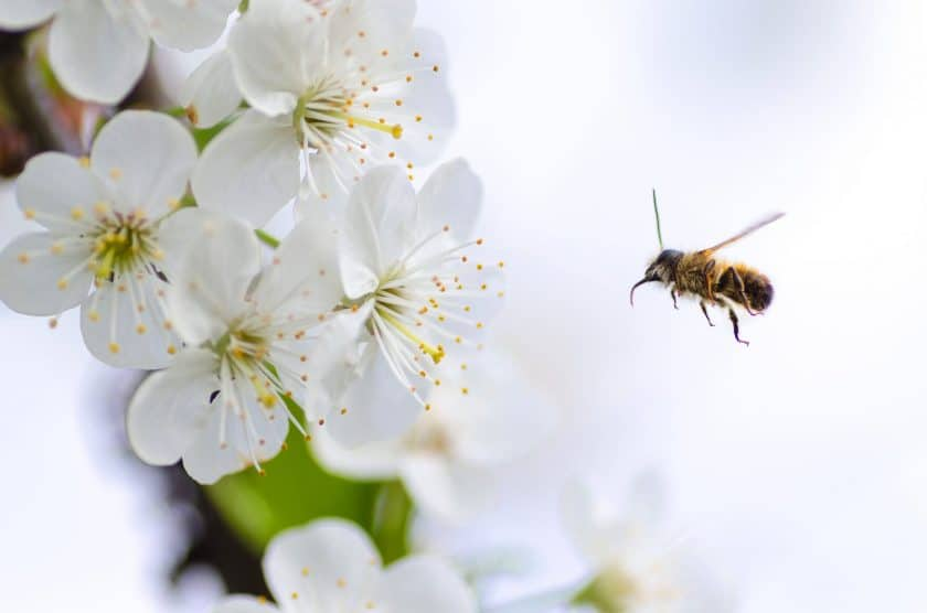 Can allergies affect your voice