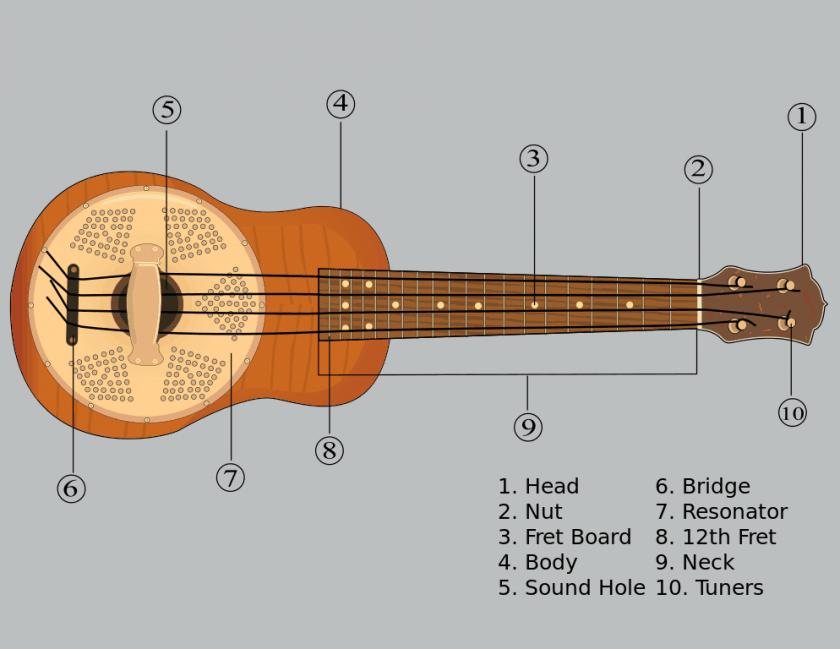 diagram of a ukulele